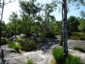 De Bois-le-Roi à Fontainebleau